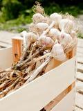 drewniany skrzynka czosnek Obraz Stock