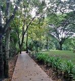 Drewniany spaceru przejście przez tropikalnego botanicznego parka Obrazy Royalty Free