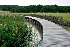 Drewniany spaceru sposób Zdjęcie Royalty Free