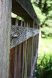 Drewniany stary mały most przez cały rzeki w parku Zdjęcie Royalty Free