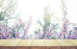 Drewniany stołowy wierzchołek na plamy Sakura kwiacie w ogrodowym tle Natura zdjęcia stock