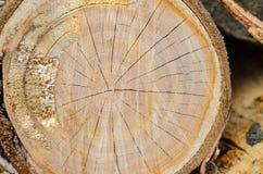 Drewniany tło łupka brogująca zdjęcie royalty free