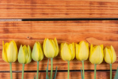 Drewniany tło z żółtymi tulipanami w rzędzie Zdjęcia Royalty Free
