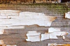 Drewniany tło z białą obieranie farbą Obrazy Royalty Free