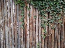 drewniany tło z liściem Zdjęcie Royalty Free
