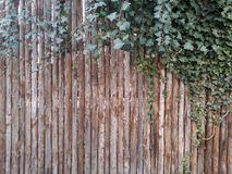 drewniany tło z liściem Obraz Royalty Free