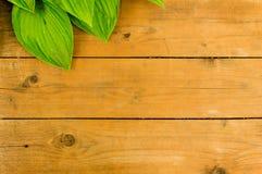 drewniany tło z liściem Zdjęcie Stock