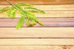 Drewniany tło z tamarynda urlopem Lewy kąt Zdjęcia Stock