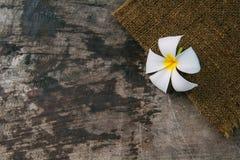 Drewniany tło z Plumeria Obrazy Stock
