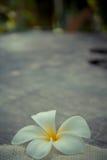 Drewniany tło z Plumeria (frangipani) Fotografia Stock