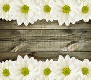 Drewniany tło z stokrotka kwiatami Fotografia Royalty Free