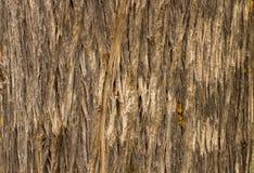 Drewniany tekstury brąz Fotografia Stock