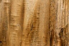 Drewniany tekstury tła zakończenie 2 Zdjęcia Stock