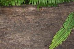 Drewniany tekstury tło dla wiadomości, paprocie leaf Obrazy Stock