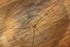 Drewniany tekstury tło, ideał dla tło i tekstury, Obraz Royalty Free