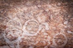 Drewniany tekstury tło z wod plamami dla projekta Zdjęcia Royalty Free