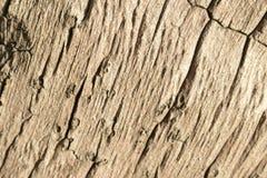 Drewniany tekstury zakończenie w górę fotografii Biel i popielaty drewniany tło Zdjęcia Royalty Free