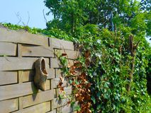 Drewniany but w Holandia Fotografia Stock
