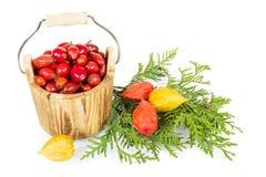 Drewniany wiadro z rosehip jagodami odizolowywać na bielu Zdjęcie Stock