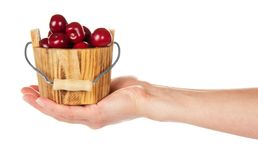Drewniany wiadro z słodkimi wiśniami na ręce Obrazy Stock