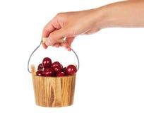 Drewniany wiadro z słodkimi wiśniami w żeńskiej ręce Obrazy Stock
