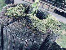 Drewniany wulkan w Chłodno kolorach zdjęcie royalty free