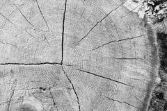 Drewniany wzór Obraz Royalty Free