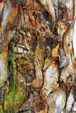 Drewniany wzór Fotografia Royalty Free