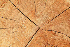 Drewniany wzór Obrazy Stock