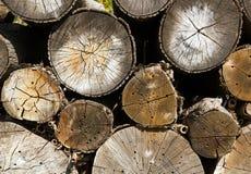 Drewniany zapas, schronienie dla pomocniczych insektów Obrazy Stock