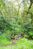Drewniany Zwyczajny most Zdjęcie Stock