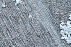 Drewnianych zawijasów tła organicznie tekstura Zdjęcia Stock