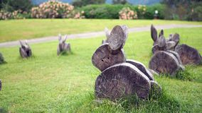 Drewno żyłuje pragnący kształt Królik zrobi drewno na trawie zdjęcia royalty free