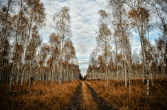 drewno Zdjęcie Stock