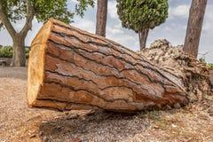 drewno abstrakcyjne Obrazy Stock