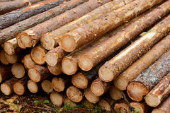 Drewno bele Zdjęcia Stock