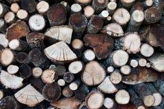 Drewno bele ciąć z widoczną adrą Drewno dla zimy z diffe Zdjęcia Royalty Free