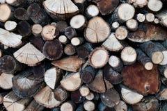 Drewno bele ciąć z widoczną adrą Drewno dla zimy z diffe Fotografia Royalty Free