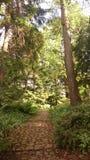 Drewno, Botanischer Garten, Berlin Obraz Royalty Free