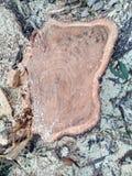 Drewno ciący, bela/ Zdjęcia Royalty Free