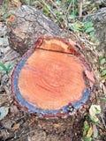 Drewno ciący, bela/ Zdjęcia Stock