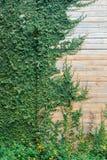 Drewno ściana z drzewem Zdjęcie Stock