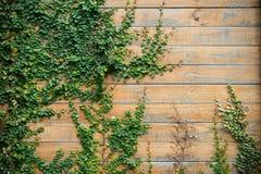Drewno ściana z drzewem 2 Zdjęcie Stock