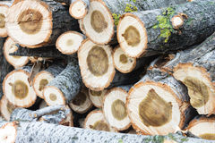 Drewno ciie natura rocznika tło Zdjęcia Stock
