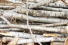 Drewno ciie natura rocznika tło Obrazy Stock