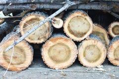 Drewno ciie natura rocznika tło Zdjęcie Royalty Free