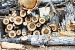 Drewno ciie natura rocznika tło Fotografia Royalty Free