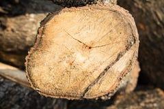 Drewno cutted zbliżenie Obrazy Stock