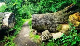 Drewno, delapre opactwo, UK Zdjęcie Stock