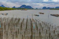 Drewno dla mussels gospodarstwa rolnego zdjęcie stock